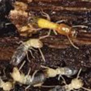 Termites Classes